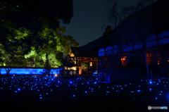 苔庭に輝く蒼き星たち