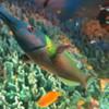 コンデジで熱帯魚
