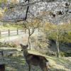 奈良でシカ。