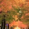 秋の街路樹 #2