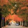 秋の街路樹 #1