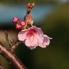 桜ふたたび