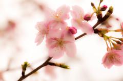 春の息吹(3)