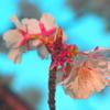 アート風~桜