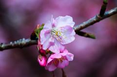春の息吹(4)