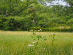 多聞櫓内の草花