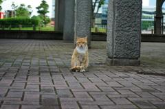 きっちりしたノラ猫さん2