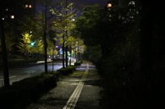 暗い朝の散歩