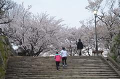 ランナーと桜