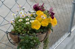 道端を飾る花壇