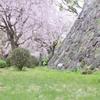 城壁と散る桜