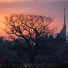 福岡タワーと夕日