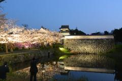 ライトアップ 城跡と桜(2)