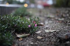 散歩道の野草(紫)