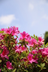 実家の花(2)