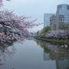 お堀の桜満開
