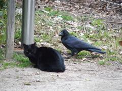 黒い友だち、魔女の使い同士の休憩