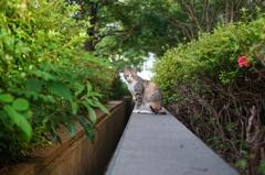 きっちりしたノラ猫さん1