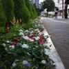 路地の花壇