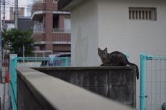 ノラ小猫さん