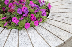 サザエさんとおりの花壇
