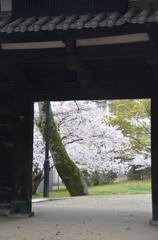 名島門と桜