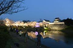 ライトアップ 城跡と桜(3)