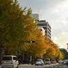 Autumn in YOKOHAMA②