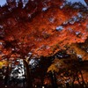 秋の色彩②