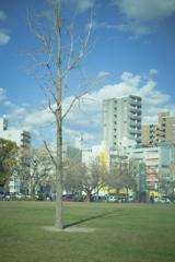 平日の公園と光と生命