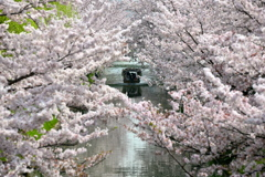花トンネル
