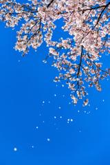 ひらひらと行く春