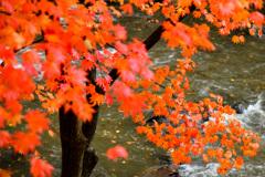 河岸の紅葉