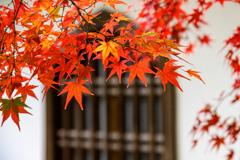 大徳寺と紅葉