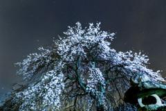 枝垂れ桜のあるお寺