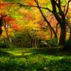 晩秋の庭(京都)