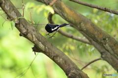 丹霞山の野鳥1