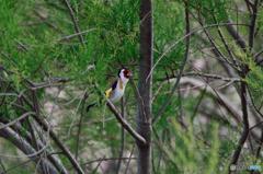 ドニャーナの野鳥達18