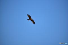 ドニャーナの野鳥達19