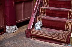 ボダラ宮殿の猫
