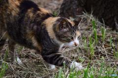 三番瀬の猫達1