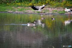 ドニャーナの野鳥達17