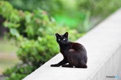 三番瀬の猫達3