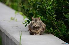三番瀬の猫達4