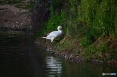 ドニャーナの野鳥達16