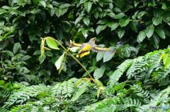 丹霞山の野鳥3