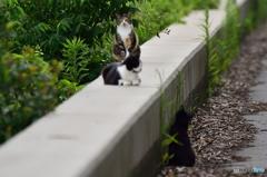 三番瀬の猫達2