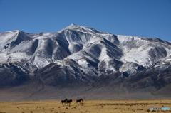 チベット雪山