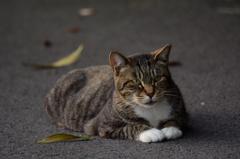 三番瀬の猫達8