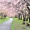 桜並木路(再編集)